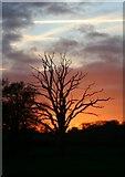 TL8063 : Flaming tree, Little Saxham by Bob Jones