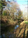 TQ4210 : Winterbourne Stream by Simon Carey