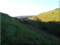 TQ4210 : The Coombe, Malling Down Nature Reserve by Simon Carey