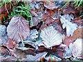 SE8790 : Leaf Litter on Track From Dove Dale by Mick Garratt