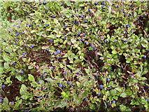 SN0729 : Whinberries at Rosebush by ceridwen