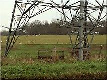 TL8627 : Farmland through a pylon by Robert Edwards