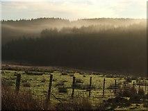 SE8097 : Misty Forest. by Steve Partridge
