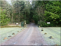 NN9952 : Driveway to Tulliemet House by Dave Fergusson