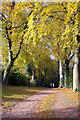 SP0073 : Footpath from Cherry Hill Road to Barnt Green Station by Phil Champion