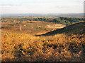 SU9052 : Ricochet Hill, Ash Military Ranges by Nigel Inkson