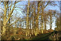 NU0007 : Winter Woodland by Peter Standing