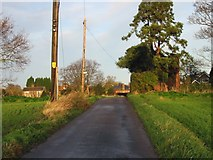 TR3156 : Looking towards Woodnesborough along small road. by Nick Smith