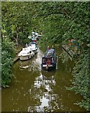 TL4196 : Wooded river approach to March town quay by David Bartlett