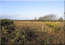 NU0937 : Gorse and ploughed field by Walter Baxter
