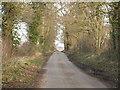 TM1073 : Tree Lined Lane by Richard Rice