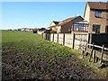 NZ3846 : Field adjoining the Winds Lonnen Estate, Murton by Oliver Dixon