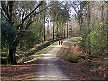 SU2609 : Track across Bagshot Gutter, Highland Water Inclosure, New Forest by Jim Champion