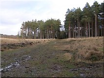 SU2609 : Cleared area in Highland Water Inclosure, New Forest by Jim Champion