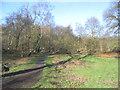 TQ6769 : Ashenbank Wood, Cobham by Stephen Craven