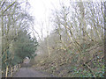 TQ6769 : Byway through Ashenbank Wood by Stephen Craven