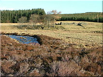 NN9040 : Ruin by The Cochill Burn by Dave Fergusson