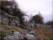 SD4488 : Wall and Crag Township Plantation by Michael Graham