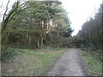 SK2962 : Farley Moor - Woodland Paths Meet at Fallen Tree by Alan Heardman