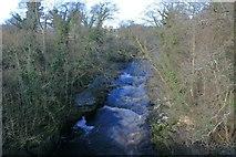 NZ0614 : River Tees by Mick Garratt