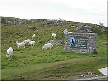 SH7783 : Goats on the Great Orme by John S Turner