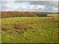 TQ8214 : Popland Wood by Simon Carey