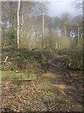 SU6978 : Bardolph's Wood by Graham Horn