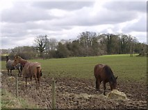 SU6977 : Farmland south of Greendean Farm by Graham Horn