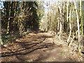 SU2992 : Footpath at Ringdale by Paul Belcher