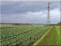 TF0611 : Public Bridleway Looking Towards Park Farm by David Woodman