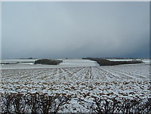 TA0163 : Danes Graves from Driffield - Langtoft by John Phillips