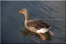 J4774 : Kiltonga nature reserve, Newtownards (3) by Albert Bridge