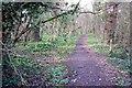 SU6407 : Bushy Coppice by Mel Stevens