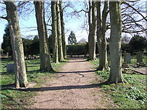 TM2692 : Avenue of Trees by Ian Robertson