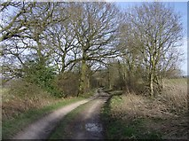 SU4659 : Byway near Whitway by Graham Horn