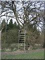 ST8445 : Platform at Norridge Wood by Phil Williams