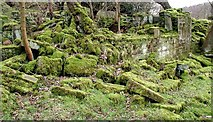 SD9726 : Callis Wood by Paul Glazzard