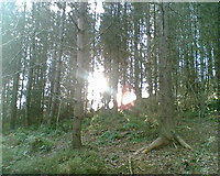 NZ1458 : Winter in Chopwell Woods by Tammi