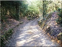 SU2609 : Sunken Track at Acres Down. by Gillian Thomas