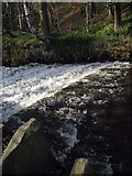 SE0619 : Black Brook, Beestones Wood by Paul Glazzard
