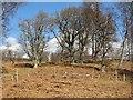 NN6059 : Oak woods, Aulich Hill by Richard Webb