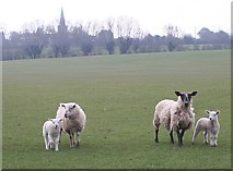 SO7937 : Sheep Pasture and Castlemorton Church by Bob Embleton