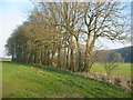 SE6077 : Small copse adjacent to private road south of Ampleforth College by Phil Catterall