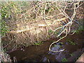 SE2646 : Stream bank, Castley lane, Castley by Humphrey Bolton