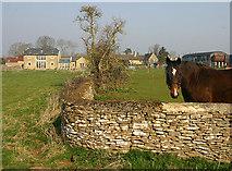 SP2504 : Horse at Kencot by Martin Loader