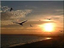 SW5031 : Seagulls at Long Rock, Penzance by Mari Buckley