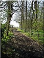 TR0153 : Bridleway by Dennis Nash Wood by Penny Mayes
