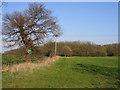 TL2658 : Public footpath to Eltisley Wood, Eltisley, Cambs by Rodney Burton