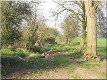 SO5093 : Farm track, Stoneacton by Richard Webb