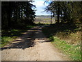 NX8555 : Track in Dalbeattie Forest by Iain Thompson